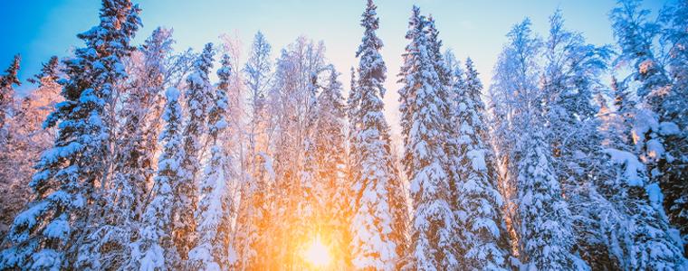 alaska winter trees and sun